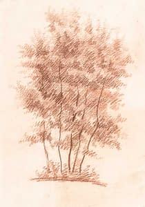 C Reymond : Groupe d'arbres