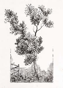 C Reymond : Étude d'arbre et feuillage